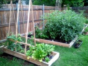 badkyard garden raised bed garden vegetable garden