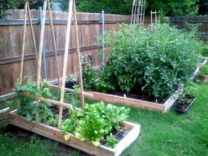 backyard garden beds vegetable garden