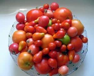 homegrown tomatoes bowl of tomatoes