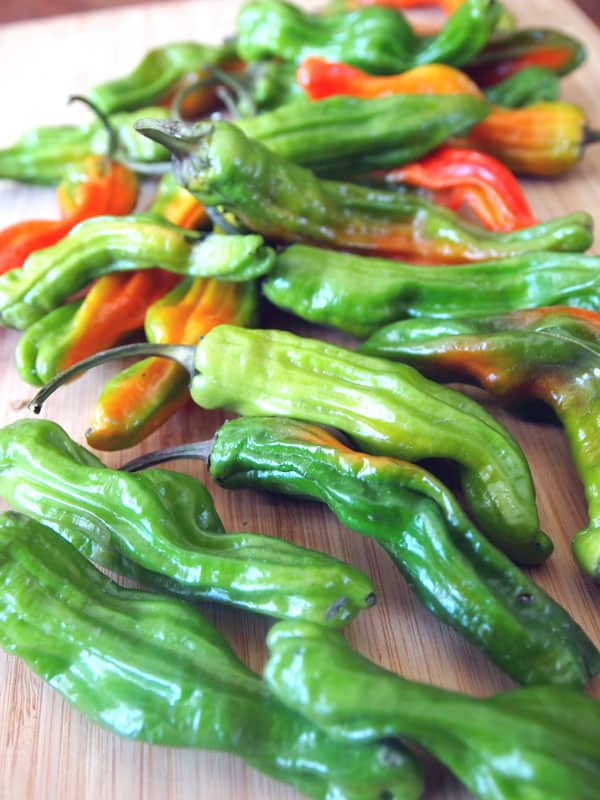 fresh raw shishito peppers