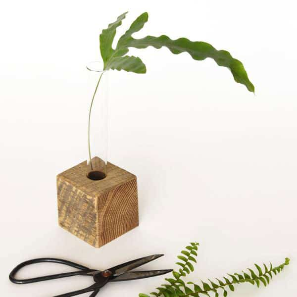 propagation vase JuneDecember