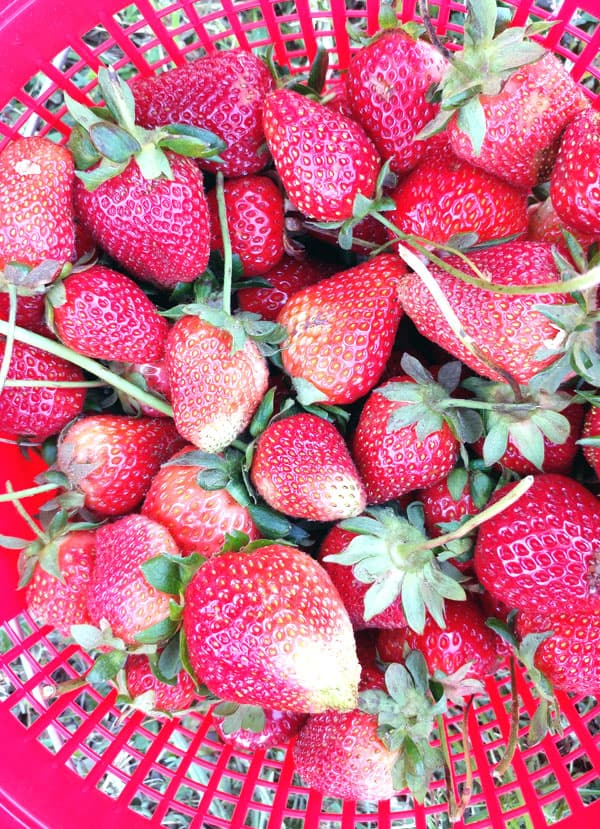 how to make organic food affordable, pick your own organic strawberries