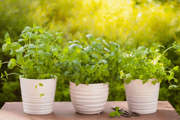 How to Start an Herb Garden in 4 Easy Steps